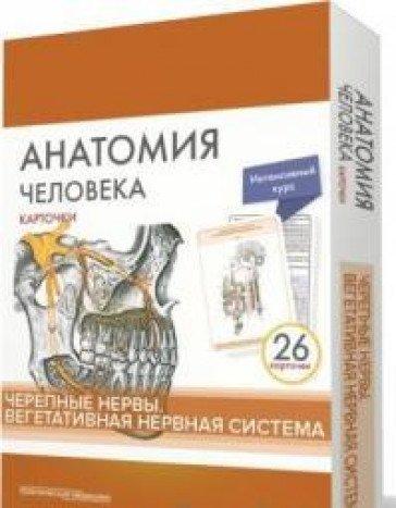 Анатомия человека.Черепные нервы.КАРТОЧКИ (26 шт)